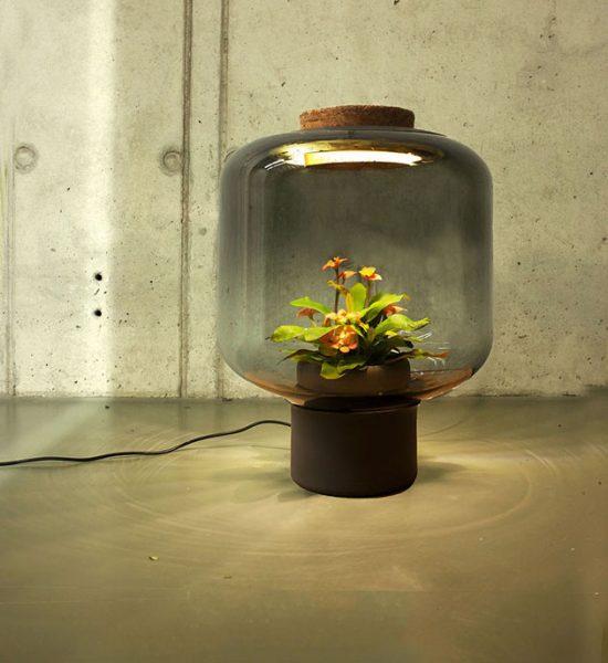 ایده ای برای پرورش گیاه در مکان های بدون پنجره